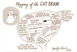 mapping_of_the_cat_brain